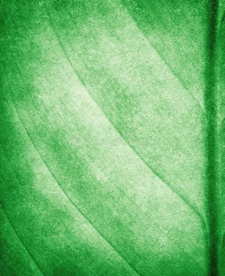 tła liść farby wzór ilustracja wektor
