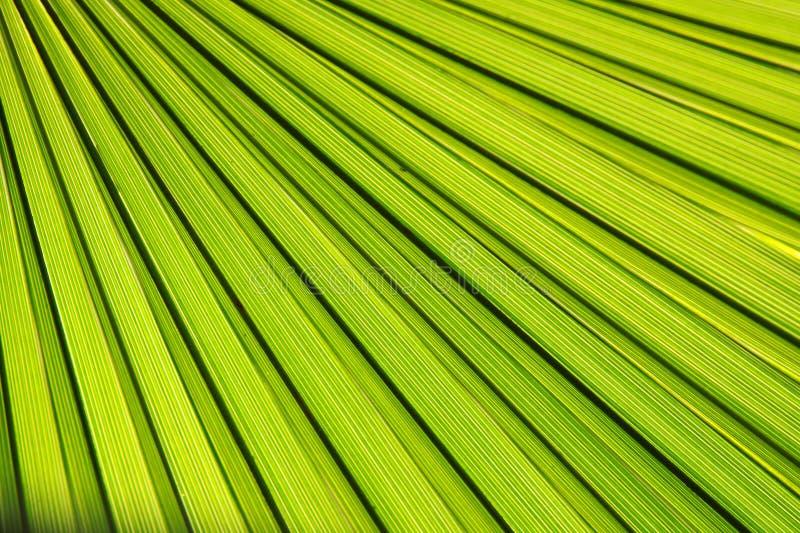 tła liść palma zdjęcia stock
