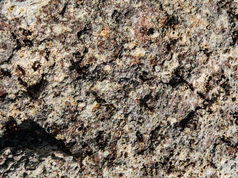 tła naturalni kamień obraz stock