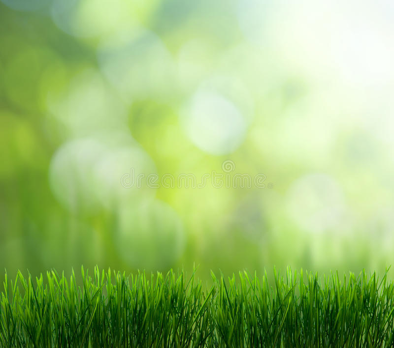tła naturalny zielony fotografia stock