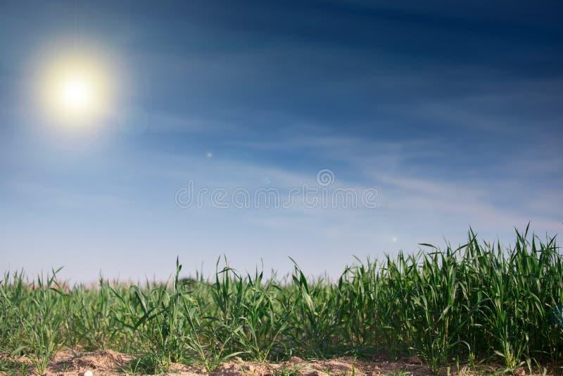 Tła niebieskie niebo i trawa fotografia royalty free