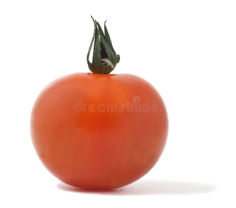 tła odosobnionej makro- fotografii pomidorowy biel zdjęcia royalty free