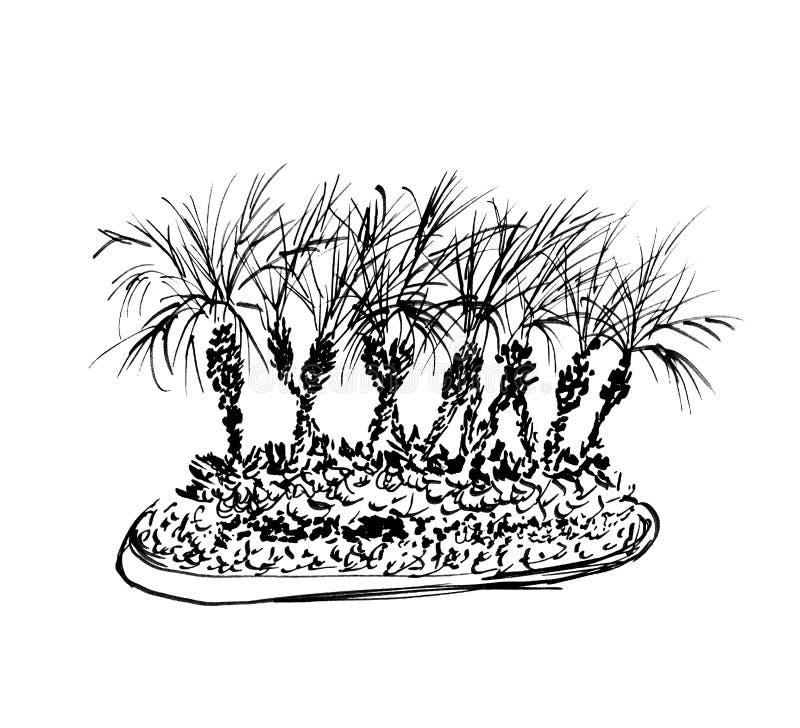 tła odosobnionych drzewek palmowych tropikalny biel Ilustracja kokosowych palm grupa czarne sylwetki Ręka rysujący nakreślenie royalty ilustracja