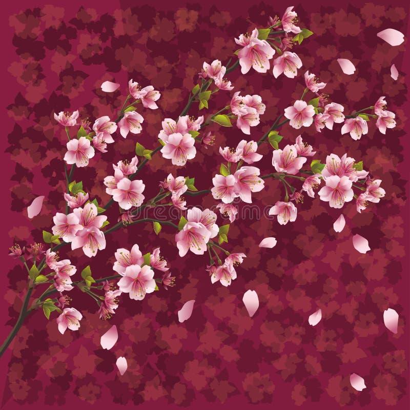 tła okwitnięcia japończyk Sakura ilustracji