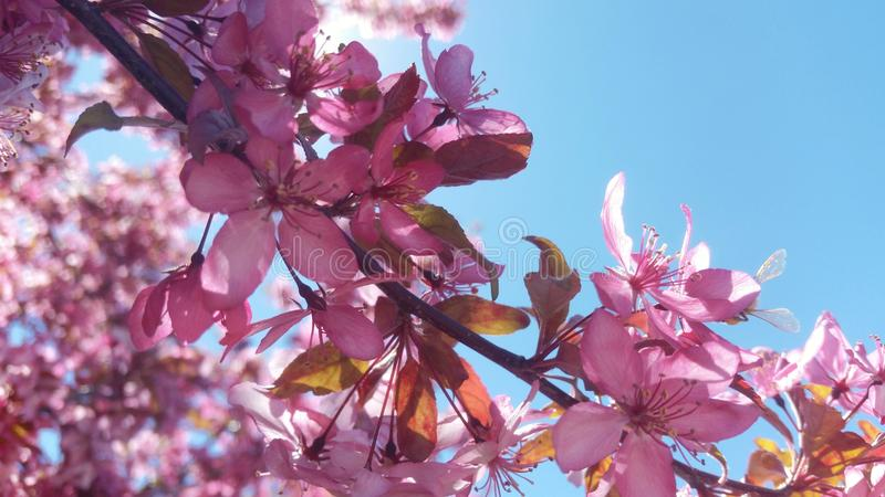 tła okwitnięcia ulistnienia pomarańczowy drzewo zdjęcie stock