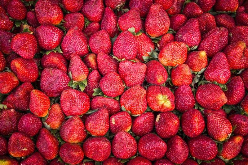 tła owoc odosobniony truskawkowy biel fotografia stock