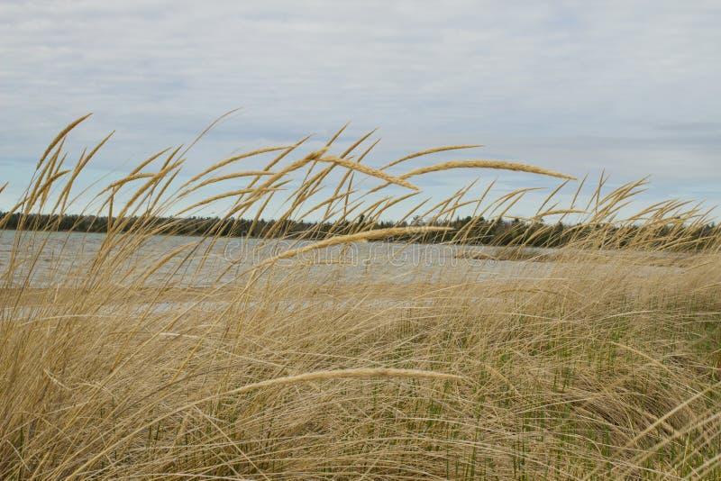 tła piłki plaży piękna pusta lato siatkówka obraz royalty free