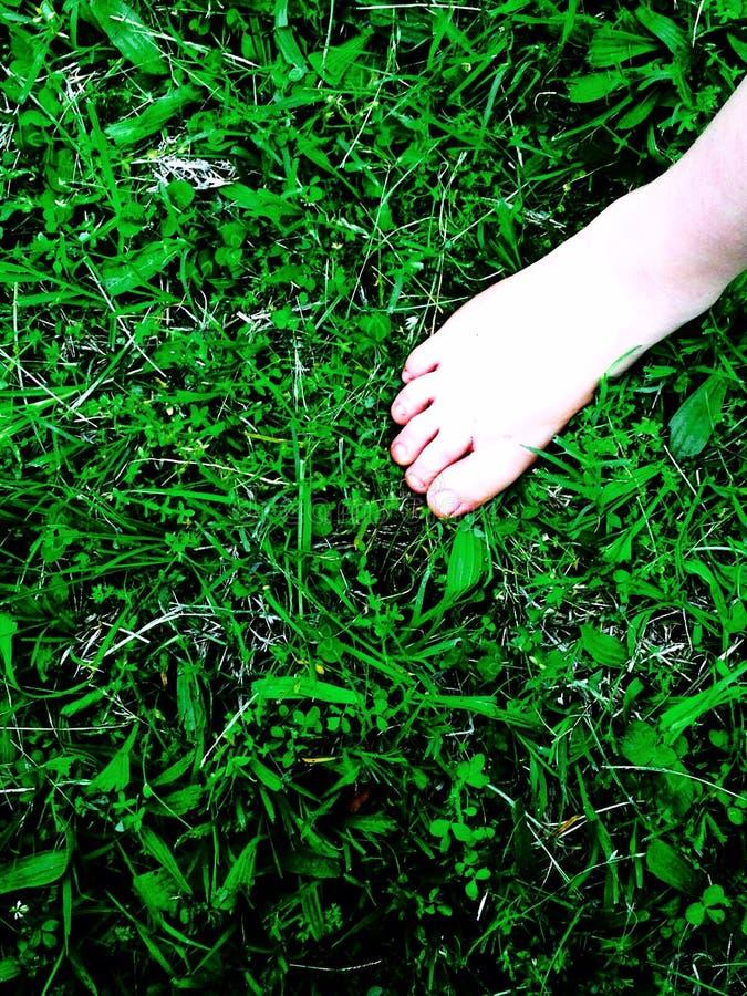 tła plamy trawy jeden rośliny lato obrazy royalty free