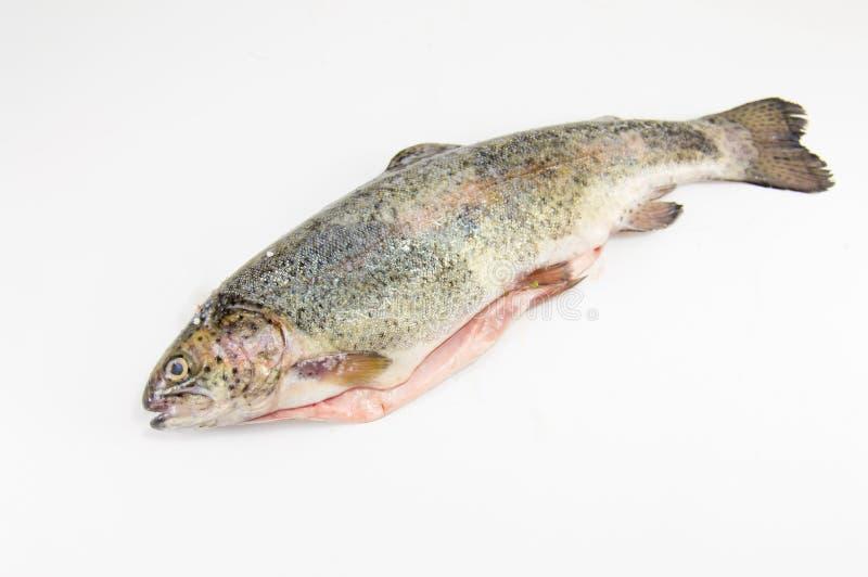 tła pojęcia ryba świeży zdrowy surowego owoce morza pstrągowy biel zdjęcia stock