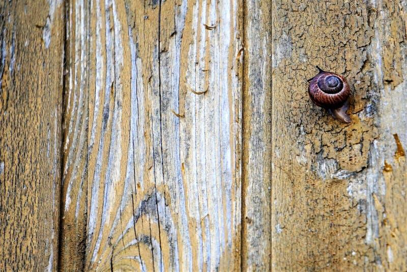 Tła puste miejsce Formalnie stara sosna malująca wsiada z ślimaczka obsiadaniem na nim fotografia royalty free