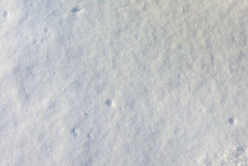 tła pusty odosobniony notatnika papieru spirali biel Piękna tekstura błękitnawy świeży śnieg Miejsce pod tekstem zdjęcia royalty free