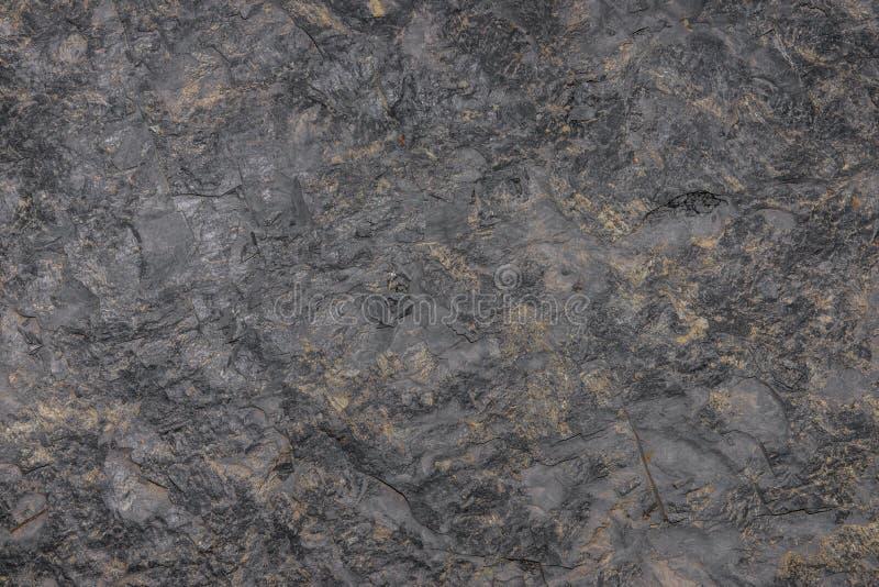 tła rośliny mała tekstury ściana zdjęcia stock