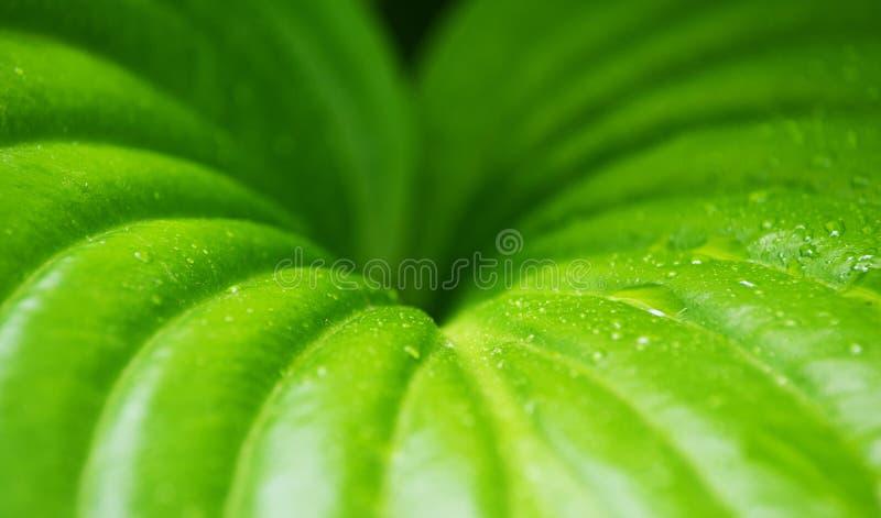 tła rosy kropel zielona liść roślina zdjęcia stock