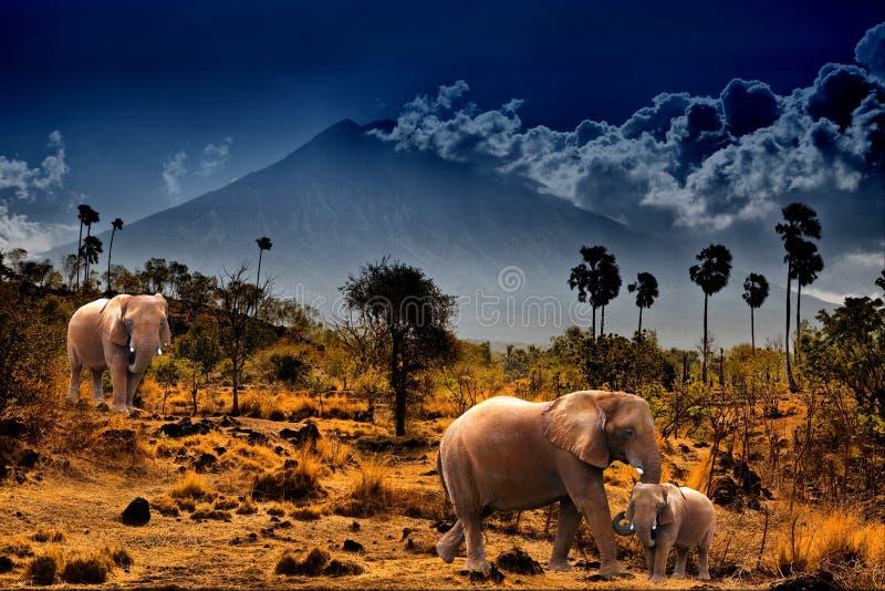 tła słoni góry zdjęcie stock