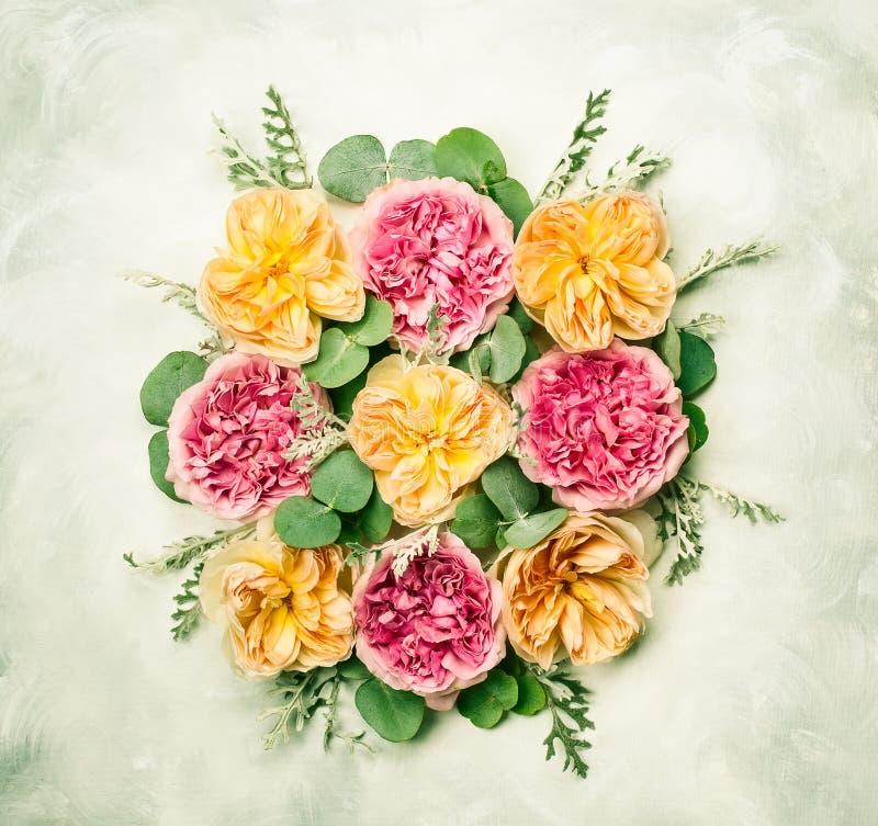 tła składu powoju kwiatu tulipany biały zdjęcia royalty free