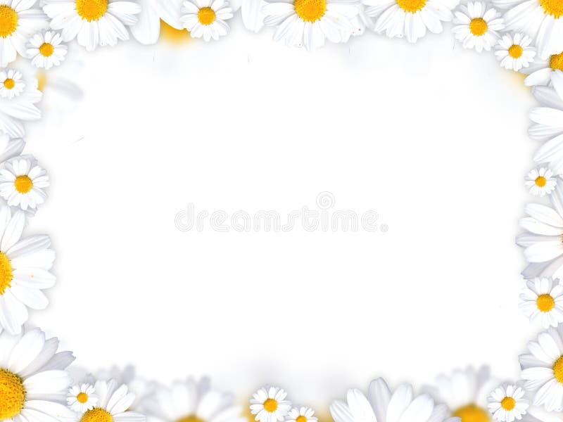 tła stokrotki kwiatów rama royalty ilustracja