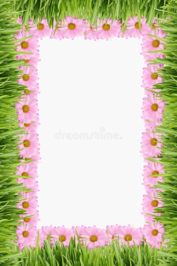 tła stokrotki trawa ilustracja wektor
