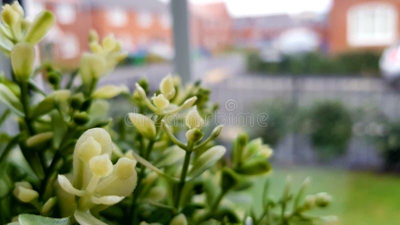 tła szczegółu domu liść rośliny use zdjęcia royalty free