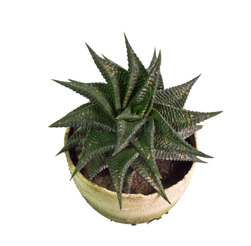 tła szczegółu domu liść rośliny use fotografia stock