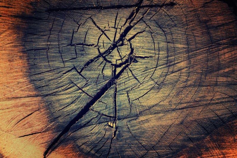 tła tekstury drzewo zdjęcia royalty free