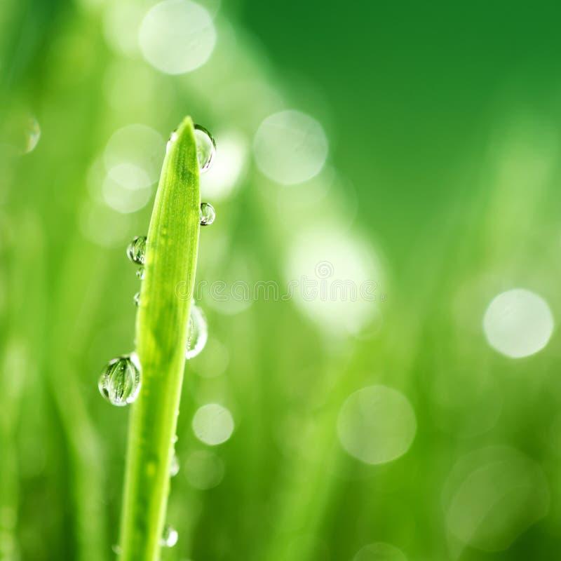tła trawy natura obraz royalty free
