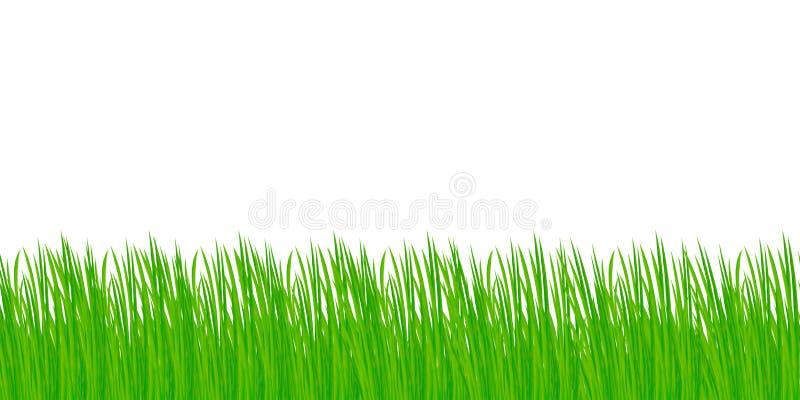 tła trawy odosobniony biel obrazy royalty free