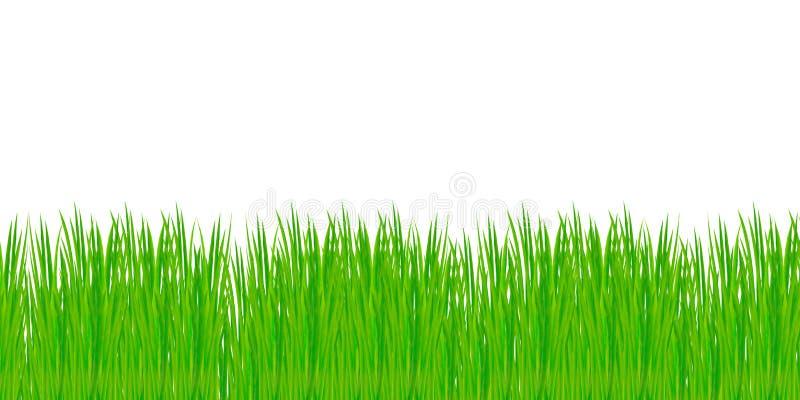 tła trawy odosobniony biel obrazy stock