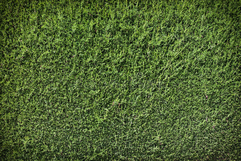 tła zieleni ściana zdjęcia stock