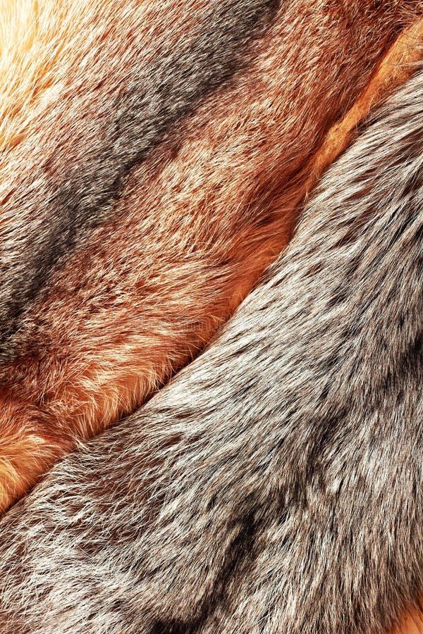 tło łączący lisa futerka czerwieni srebro zdjęcia stock