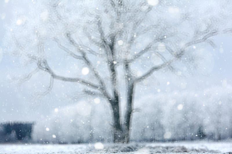 Download Tło śnieżny las zdjęcie stock. Obraz złożonej z spokój - 57659066