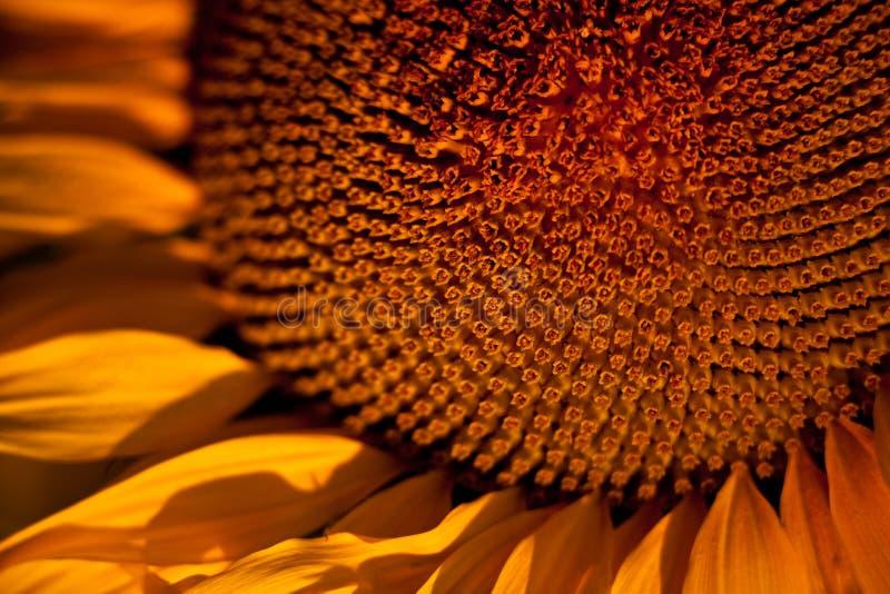 tło abstrakcjonistyczny słonecznik zdjęcia stock