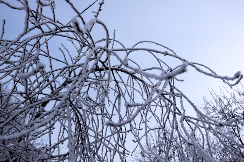 tło abstrakcyjna zimy E obrazy royalty free