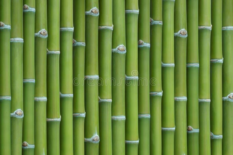 tło bambus fotografia royalty free