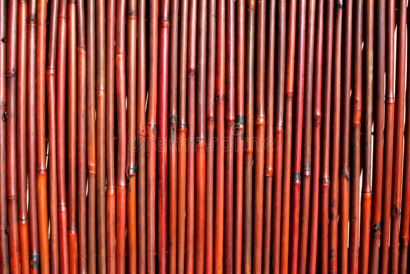 tło bambusa ciemności zdjęcia royalty free