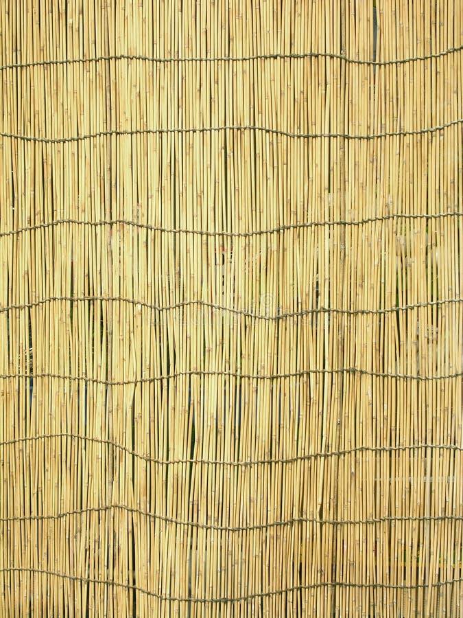 tło bambusowy cień. obraz stock
