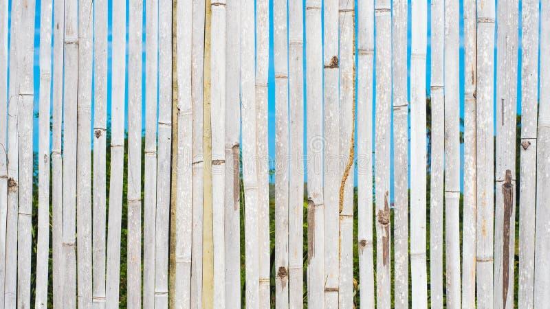 10 tło bambusowy eps ilustraci wektor zdjęcie royalty free