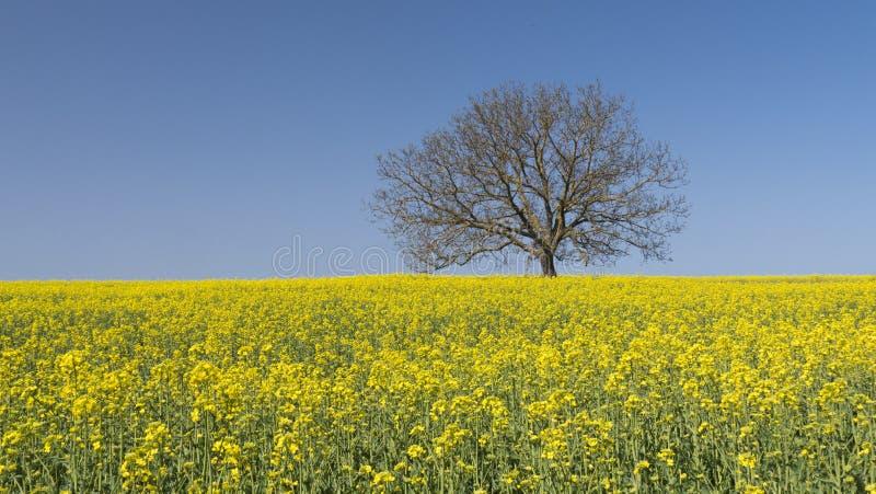 tło barwi świeżego zielonego pralnianego wiosna biel kolor żółty zdjęcia stock