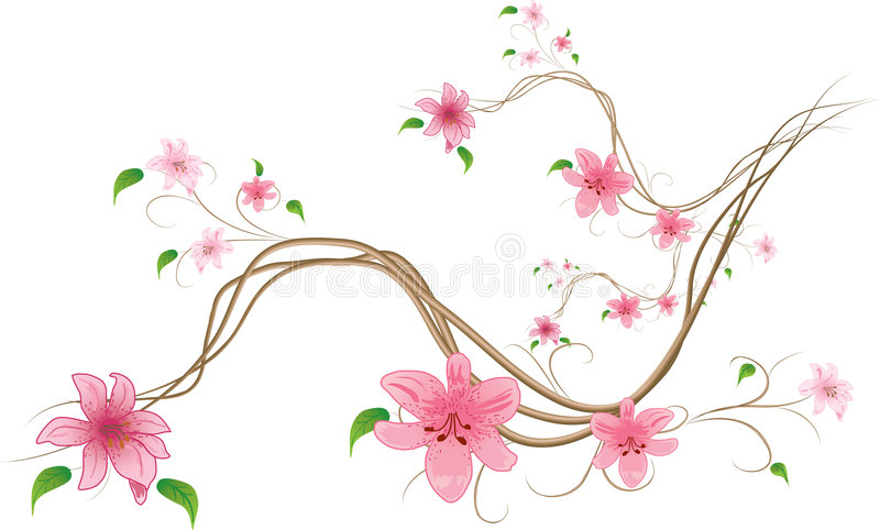 tło białe lilie ilustracji