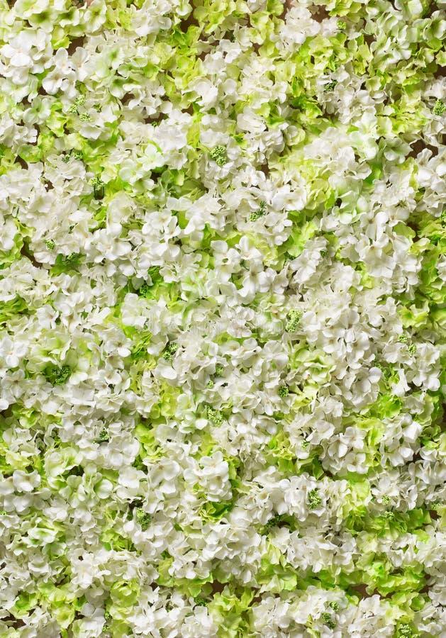Tło biali kwiaty obraz royalty free