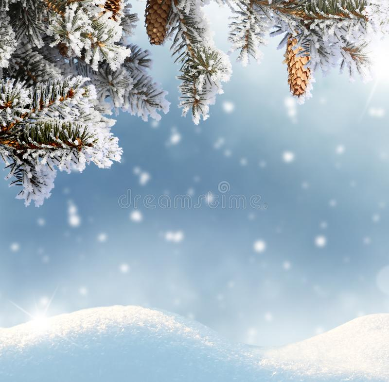Tło bożonarodzeniowe z gałęzią i stożkami jagodowymi zdjęcie royalty free