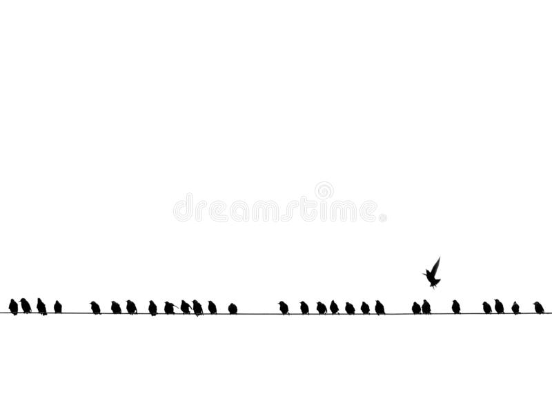 Tło czarni ptaki na drucie odizolowywającym obrazy royalty free