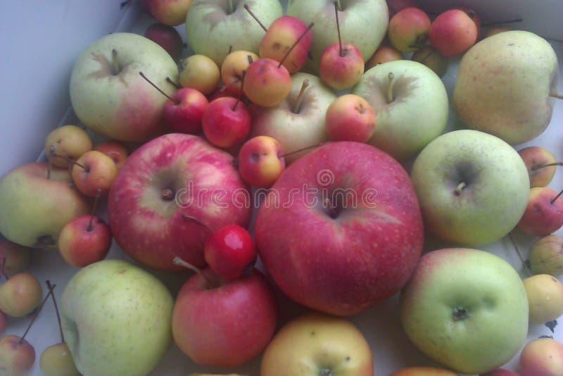 Tło czerwieni i zieleni jabłka obraz stock