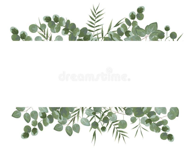 Tło dla teksta od eukaliptusa szarość i zieleni eukaliptus Ja ilustracji