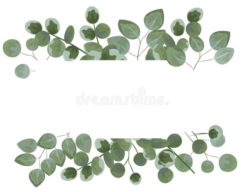 Tło dla teksta od eukaliptusa szarość i zieleni eukaliptus Ja royalty ilustracja