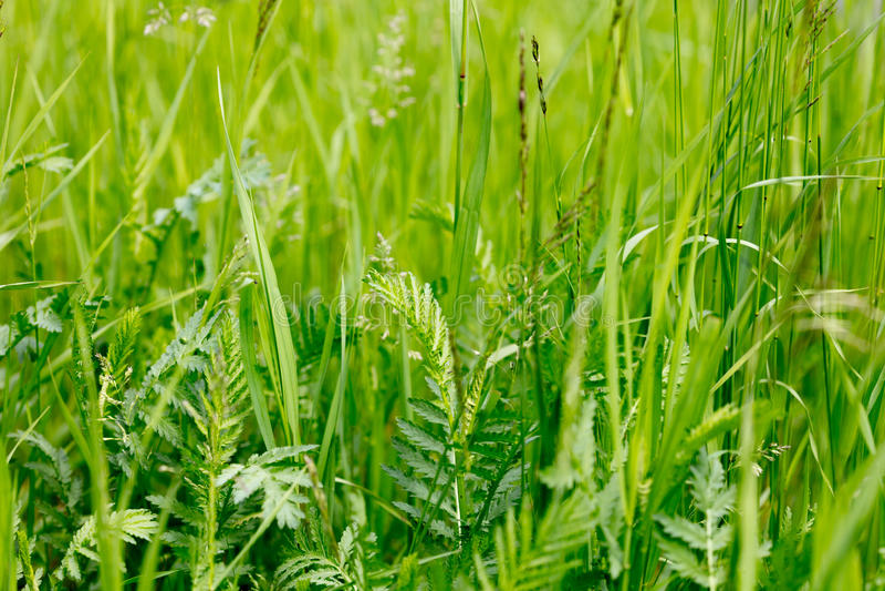 Tło dzikie trawy zdjęcia royalty free