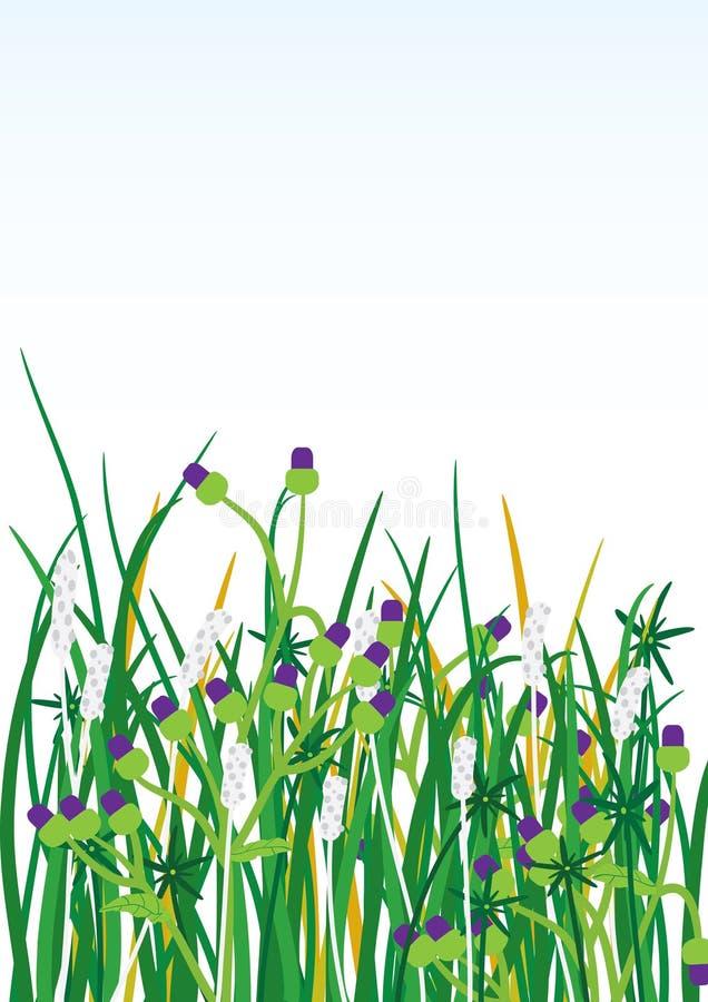 tło eps kwitnie trawy dzikie ilustracji