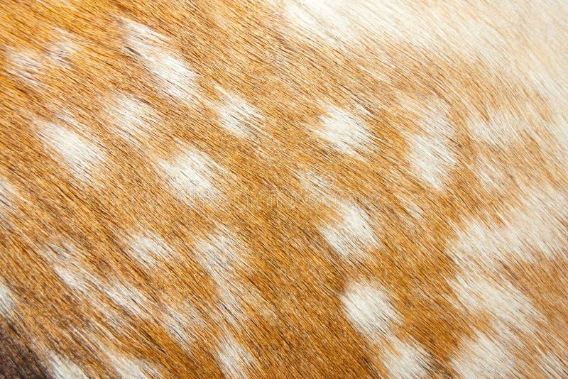 tło gazela zdjęcie stock