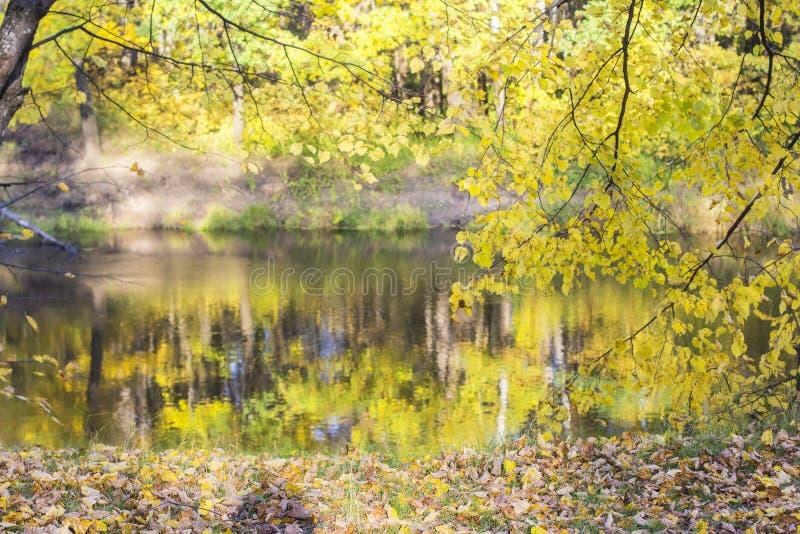Tło jesieni krajobrazu panoramy żółta gałązka lipowa obrazy royalty free