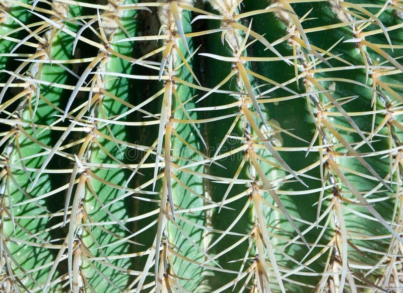 tło kaktus zdjęcia stock