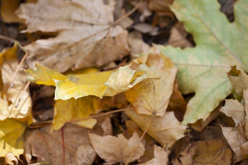 Tło kolorowi jesień liście na lasowej podłoga fotografia stock